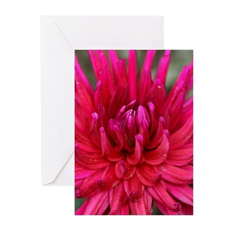 Pink Dahlia Flower 532 Greeting Cards
