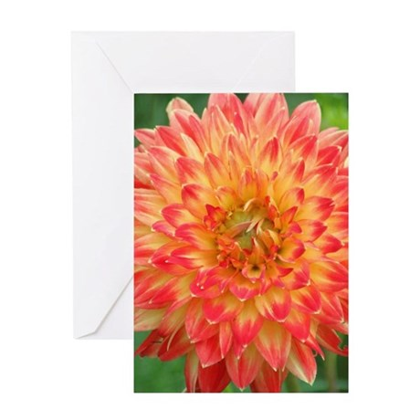 Procyon Dahlia Flower Bloom 087 Greeting Cards