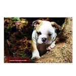 Bulldog Puppy Postcards (Package of 8)