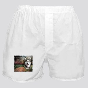 """Why God Made Dogs"" Malamute Boxer Shorts"