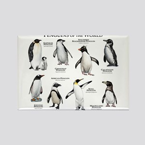 Penguins of the World Rectangle Magnet