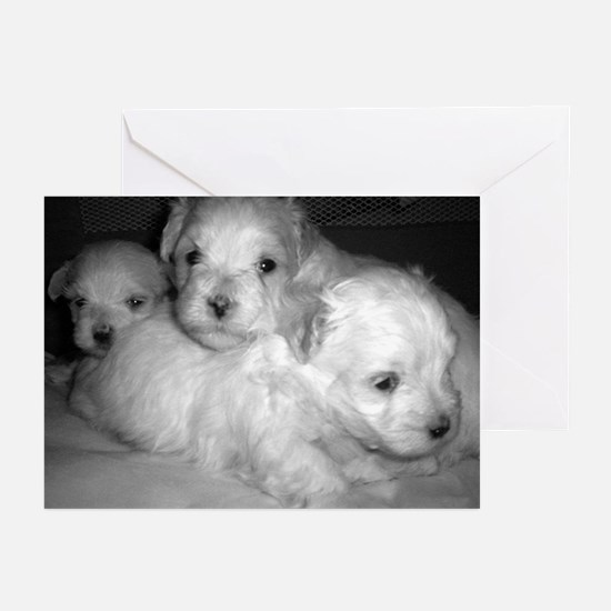 Puppy Portrait Greeting Cards (Pk of 10)