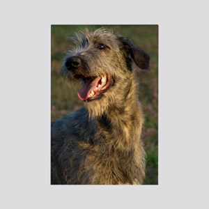 Young Irish Wolfhound (W) Rectangle Magnet