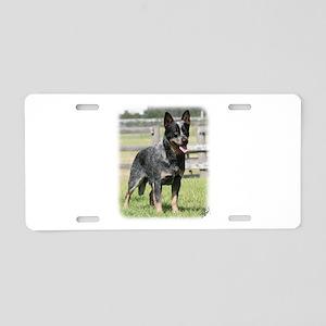 Australian Cattle Dog 9Y749D-017 Aluminum License