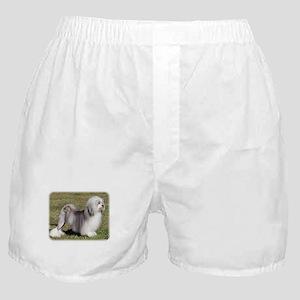 Lowchen 9Y400D-014 Boxer Shorts