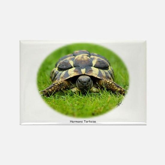 Hermann's Tortoise 9W027D-048 Rectangle Magnet
