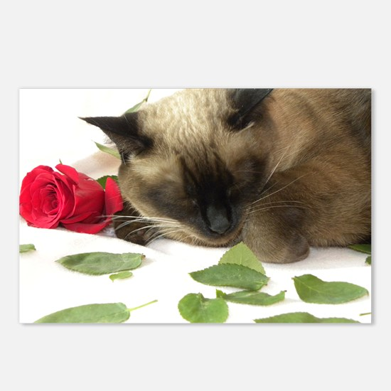 Funny Siamese cats Postcards (Package of 8)