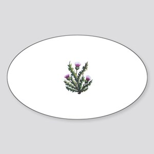 scottish thistle Oval Sticker