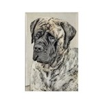 English Mastiff (Brind Rectangle Magnet (100 pack)