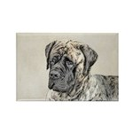 English Mastiff (Brindl Rectangle Magnet (10 pack)