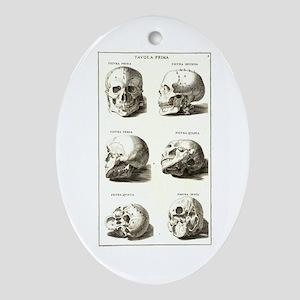 Vintage Skulls Chart Oval Ornament