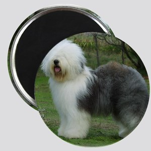 Old English Sheepdog 9F054D-17 Magnet