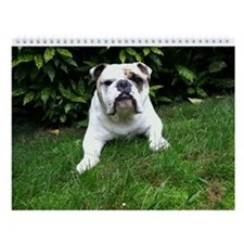 "Bulldog Wall Calendar ""B"""