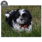 Adorable Shih Tzu Puppy Puzzle