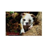 Bulldog Puppy Rectangle Magnet
