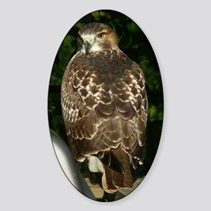 Red-tailed Hawk Sticker (Oval)