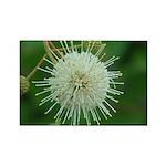 Buttonbush Flower -Rectangle Magnet