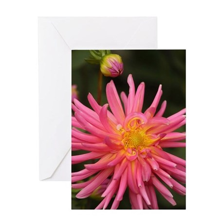 dahlia flower in the flower bed Greeting Cards