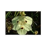 African Iris - Rectangle Magnet