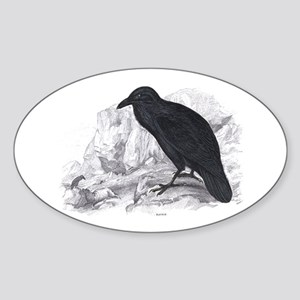 Black Raven Bird Oval Sticker