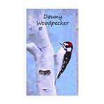 Downy Woodpecker Sticker (Rectangle)