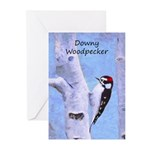 Downy Woodpecker Greeting Cards (Pk of 10)