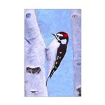 Downy Woodpecker Mini Poster Print