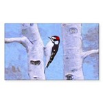 Downy Woodpecker Sticker (Rectangle 50 pk)