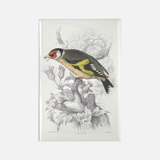 Goldfinch Bird Rectangle Magnet