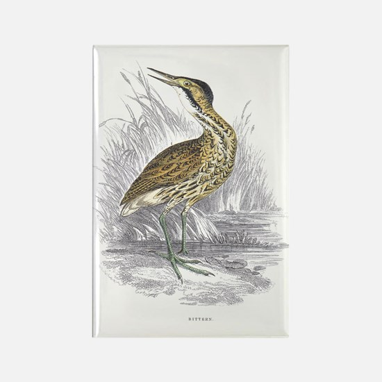 Bittern Bird Rectangle Magnet