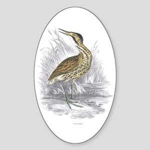 Bittern Bird Oval Sticker