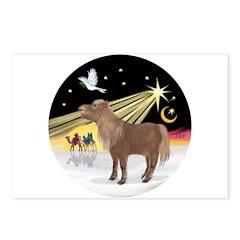 XmasDove-Shetland Pony Postcards (Package of 8)