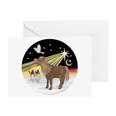 XmasDove-Shetland Pony Greeting Card