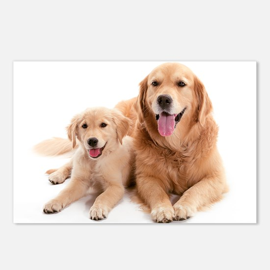 Golden retriever buddies Postcards (Package of 8)