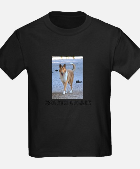 Cute Smooth collies T