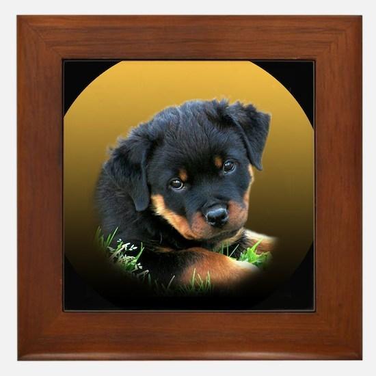 Rottweiler Puppy on more Gift Framed Tile