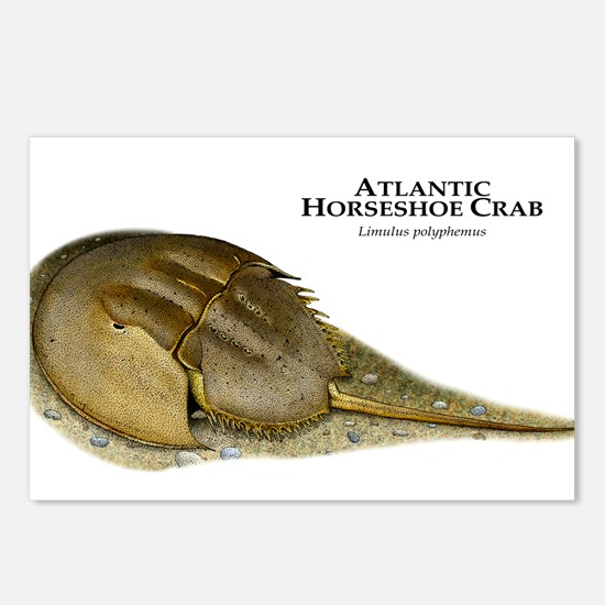Atlantic Horseshoe Crab Postcards (Package of 8)