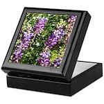 California Lupine Keepsake Box