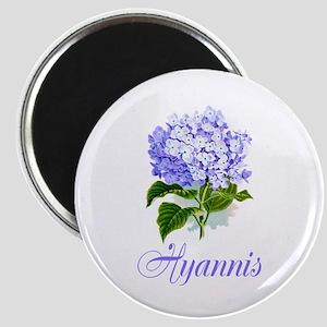 Hyannis Hydrangeas Magnet