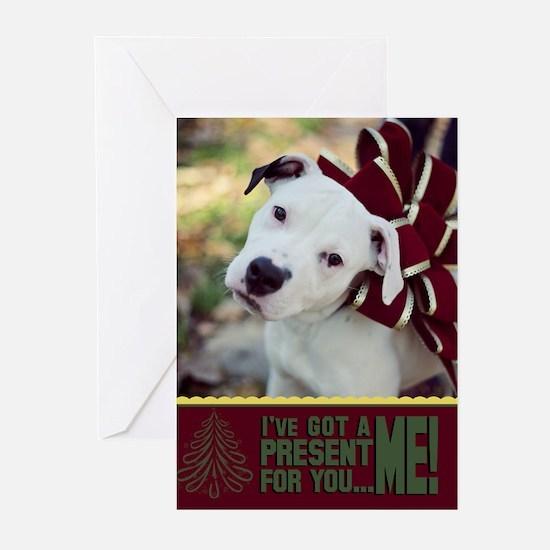 StubbyDog Present Greeting Cards (Pk of 10)