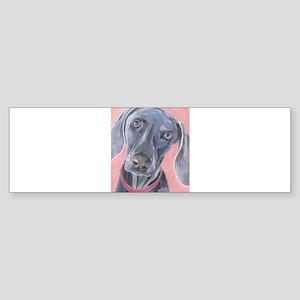 Weimaraner Bumper Sticker