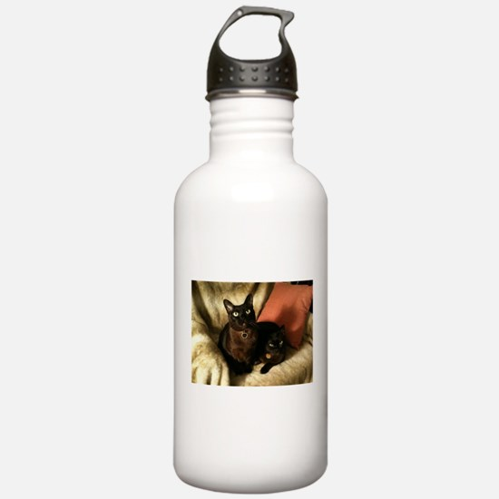 2 Brown Burmese on chair - Sports Water Bottle