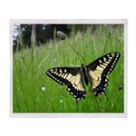 Anise Swallowtail Butterfly Throw Blanket