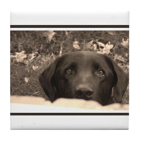 Black Labrador Tile Coaster