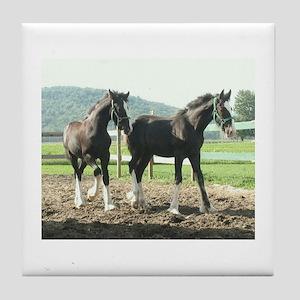 English Shire Foals Tile Coaster