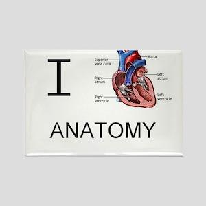 I heart anatomy Magnets