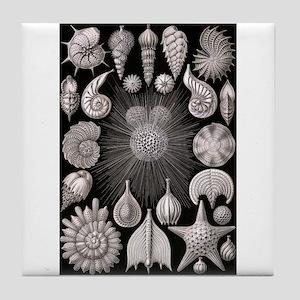 Nautiloids Tile Coaster