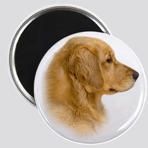 Golden Retriever Portrait Magnet