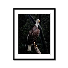 Amazing Eagle Decor Collectio Framed Panel Print