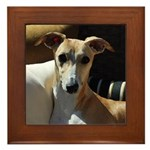 Whippet Framed Tile